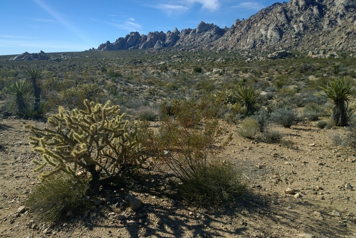 in-the-middle-of-mojave-national-preserve