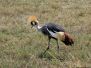 Safari with birds in Tanzania