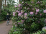 University of Helsinki rhododendron garden at Midsummer 2009