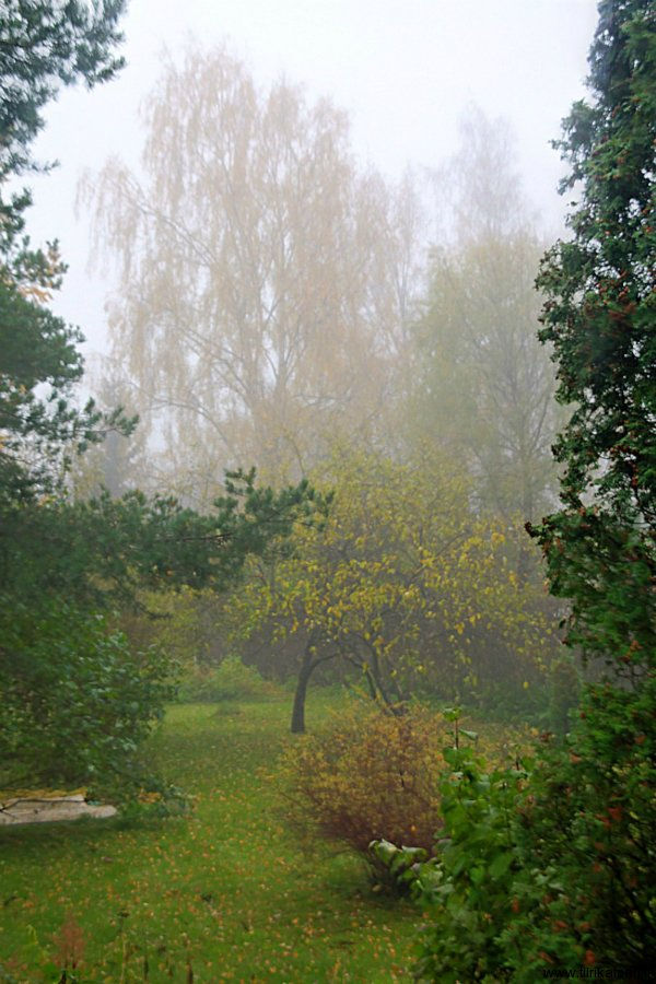 23-10-2011 - beginning of the end of Autumn at home garden