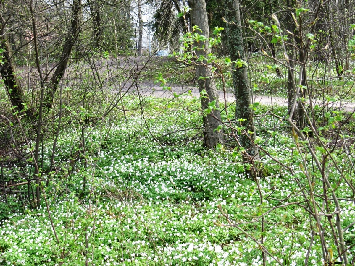 09-5-2013-forest-turns-spring-to-summer