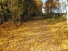 13-10-2013-fall-colors-have-fallen
