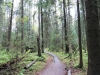 20-9-2013-first-signs-of-autumn-in-helsinki-old-growth-forest