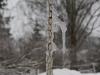 07-04-2013-frozen-water-chain-in-april-snowing