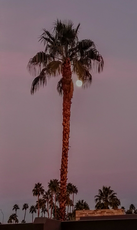 19-01-2019-almost-full-moon-rising-in-Palm-Springs
